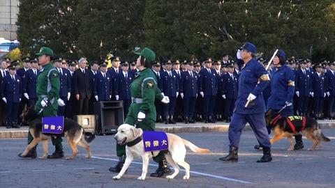 【東京】警視庁が年頭の出動訓練 吉田警視総監が見守る中、パトカーや白バイ、警察犬が行進