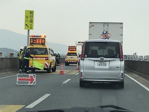 【画像】 高速道路公社「ネコ捕獲中」