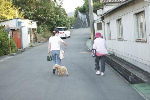 犬の散歩、車道側にワンコ、内側に人間。車乗ってると、そのワンコ見えねーんだよ