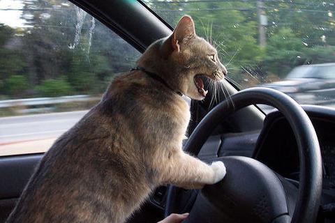 運 転 中 に 腹 が 立 つ こ と