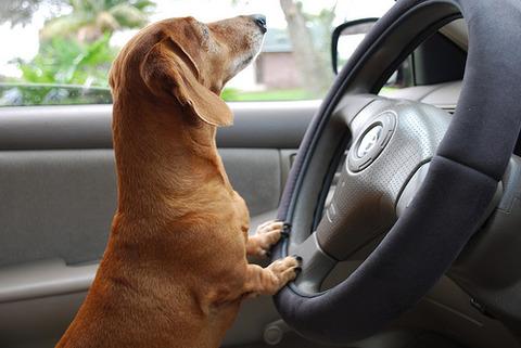 対向車が譲ってくれたとき右手のひら上げて挨拶してるんだけどこれ変なの?