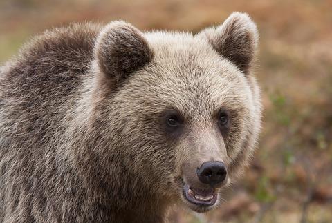 bear-1374486_640