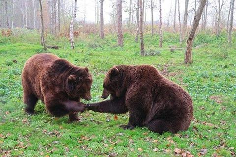 bear-3982960_640