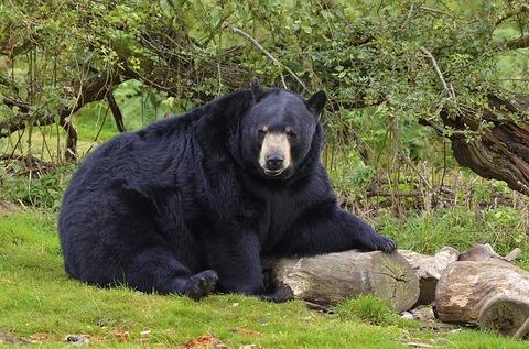 bear-1919111_640