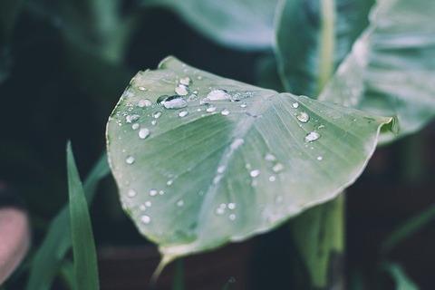 rain-2573488_640