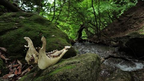 bone-1696609_1280