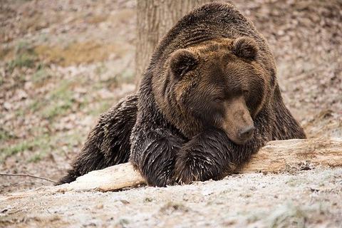 bear-1903101_640