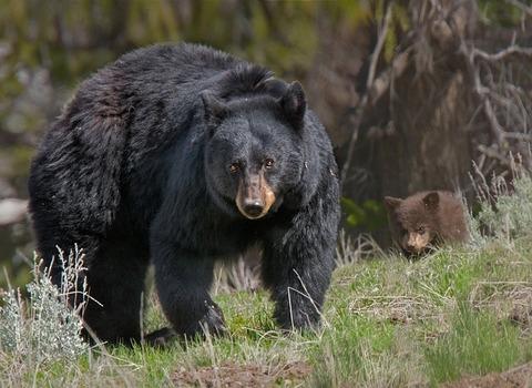 bear-2645320_640