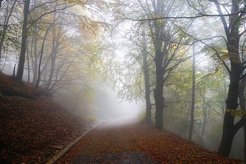 fog-2887569_640