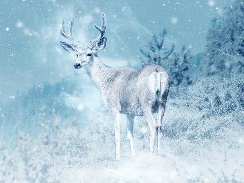 moose-2240873_640