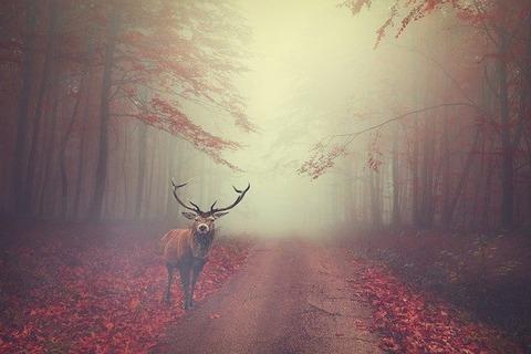 deer-5707439_640