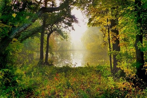 nature-3142302_640