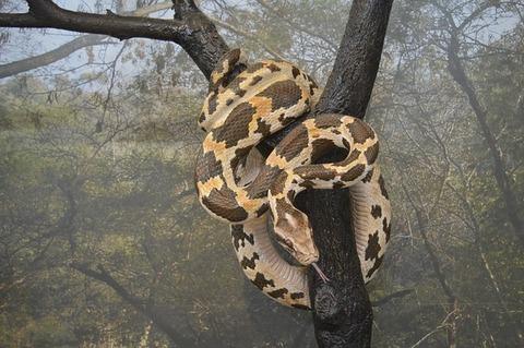 python-1689081_640