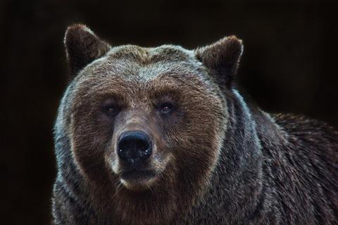 bear-4118795_640