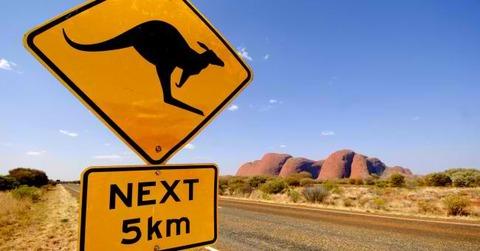 travel_australia_kangaroo_road_nature