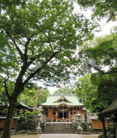 大鷲神社・花畑4