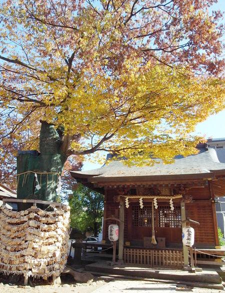 松戸神社5