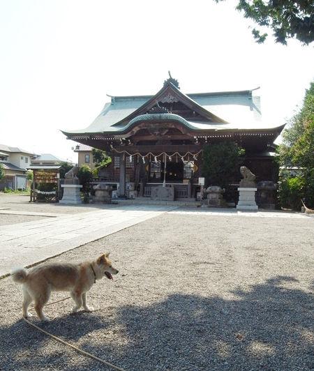 別雷神社2