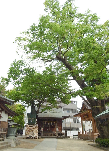 松戸神社0