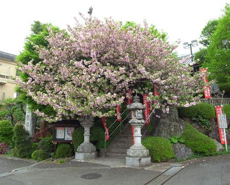 1観福寺6