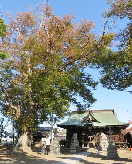 大桑神社8