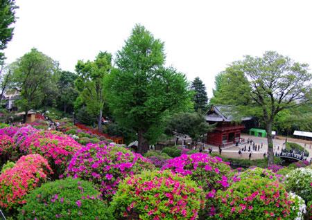 200804根津神社