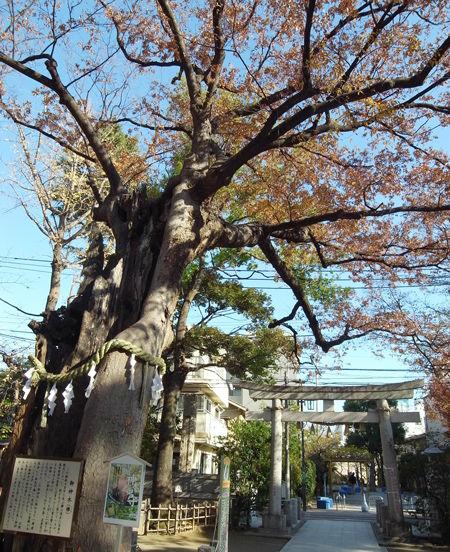 新田神社b