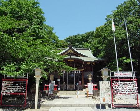 氷川神社・青木1
