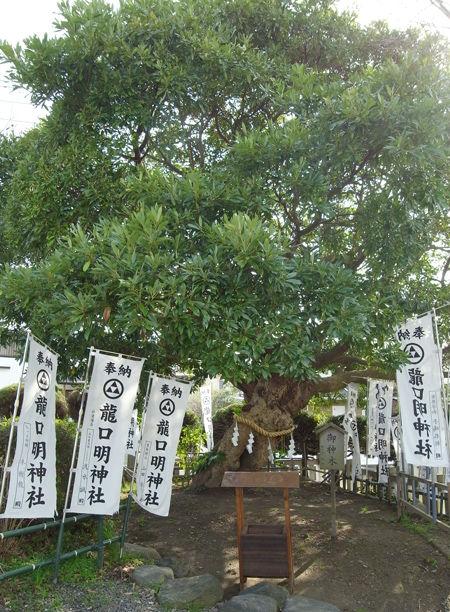 龍口明神社5