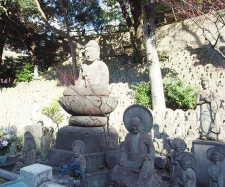 大円寺・1月