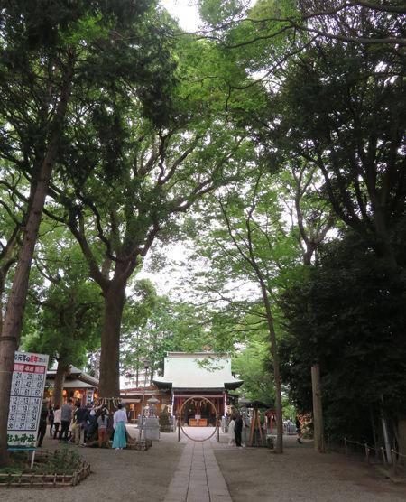 星川杉山神社・夏越2