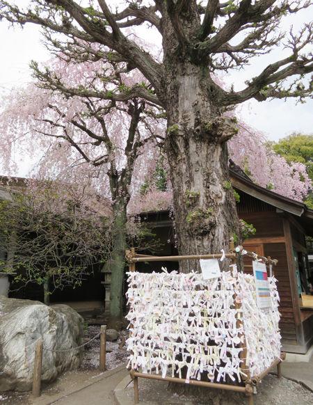 二荒山神社3