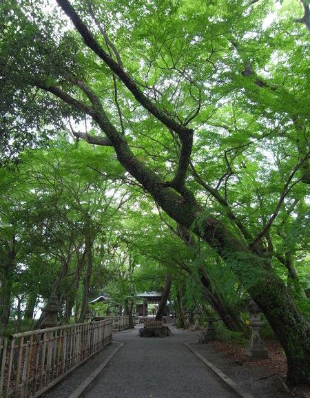 山内神社・参道