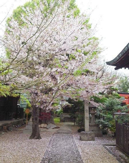 三輪神社・4月稲荷6