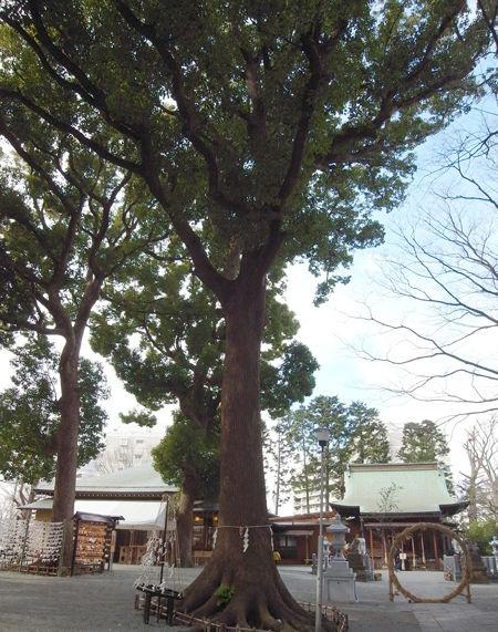 星川杉山神社9