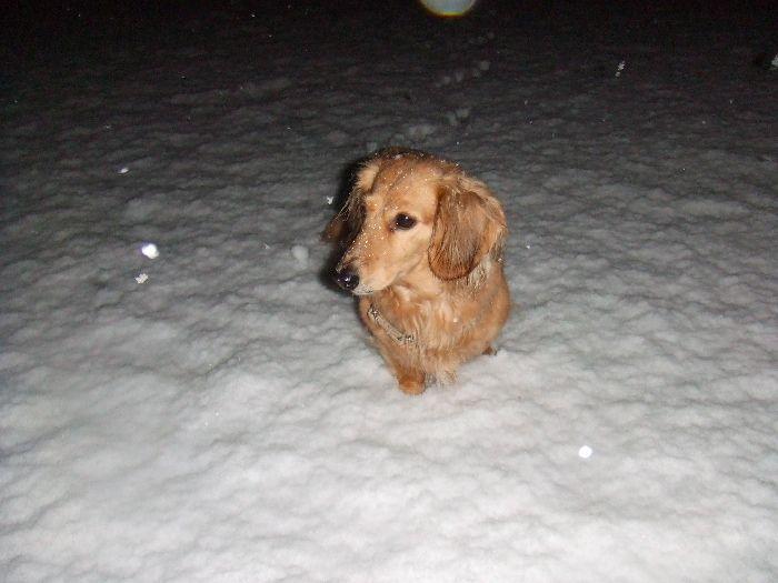 先週の大雪-2