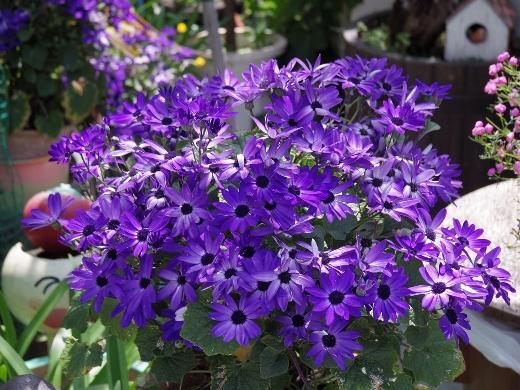 花やしきと言うだけあって、園内には花が沢山!