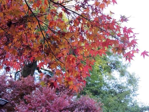 高尾山駅に到着し紅葉狩りを。高尾山駅周辺の紅葉もいい感じに色づいてました。
