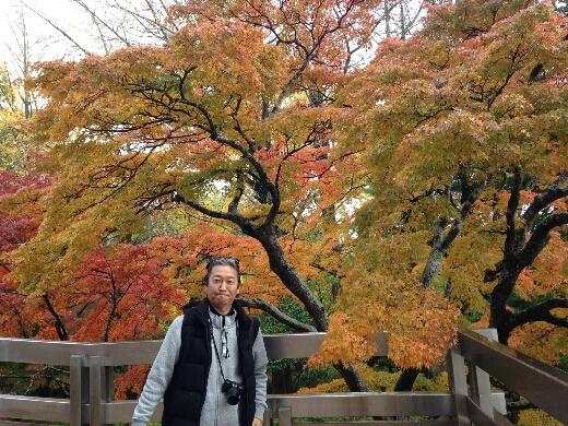 成田山平和大塔周辺の紅葉もいい感じに色づいていましたよ。