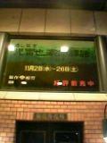 菊ちゃん1