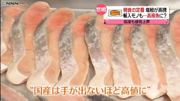 サケが高級魚に?