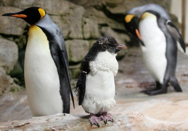 webs180928-penguin-thumb-720xauto