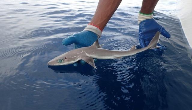 shark-180718