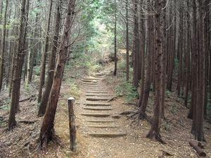 20111112_katsuo09