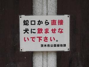 20121216_ibaraki_17