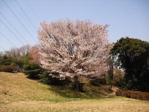 20130413_narukawa_18