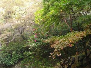 20111112_katsuo04
