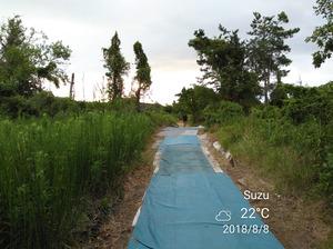 大阪4隊のスカウトはこの裏道を通っていきます。
