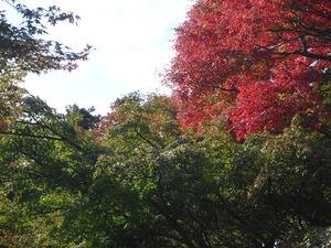 20111112_katsuo14