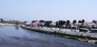 渡月橋からみた桜の風景